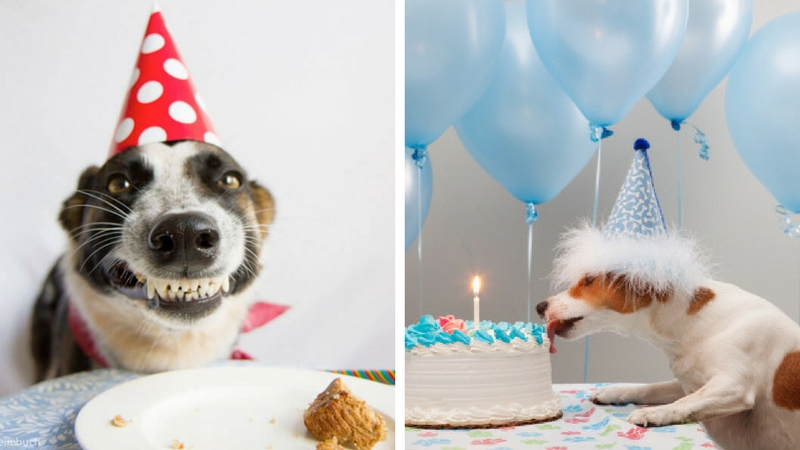 These 31 Happy Birthday Dog Images Are So Cute Im Wagging My