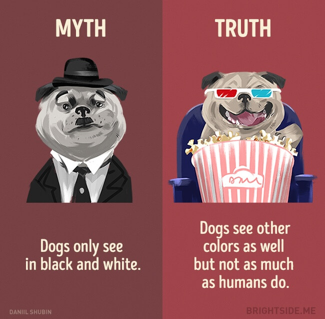myth vs reality (1)