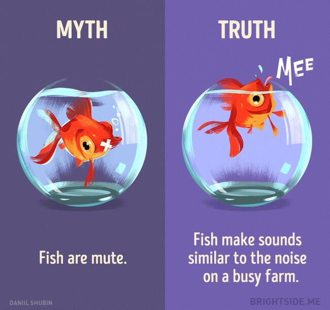 myth vs truth 10 (1)
