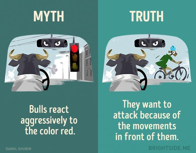 myth vs reality 2 (1)
