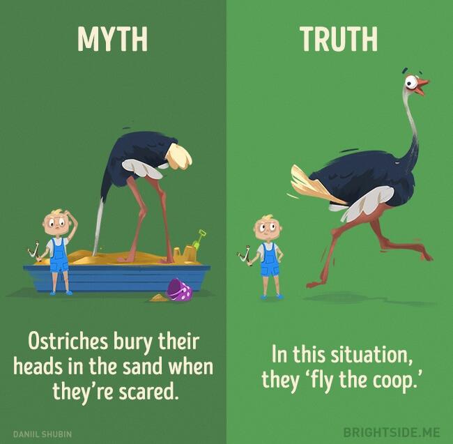 myth vs truth 3 (1)
