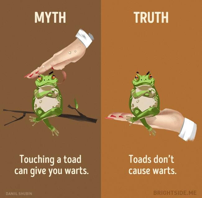 44 Myth Vs Reality Illustrations That Will Make You Think