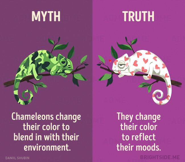 myth vs truth 5 (1)