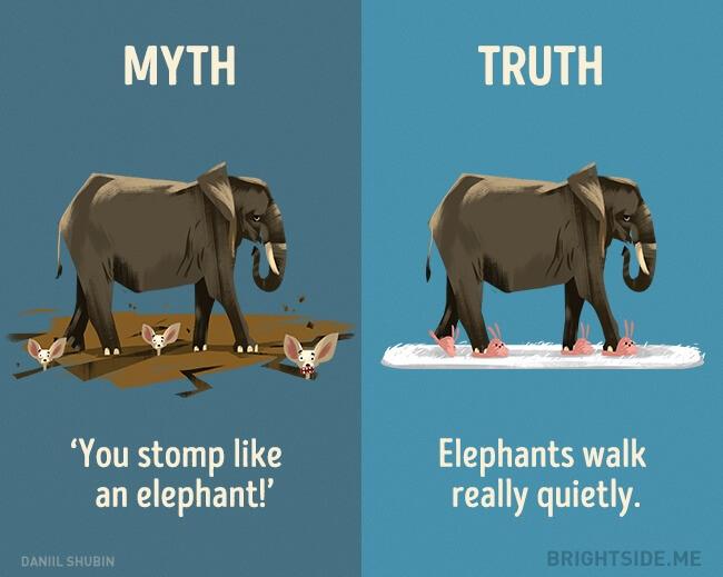 myth vs truth 6 (1)