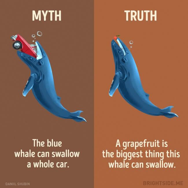 myth vs truth 7 (1)