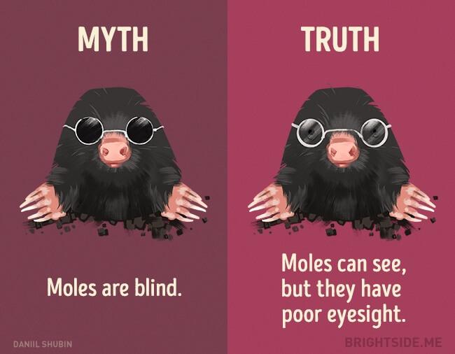 myth vs truth 8 (1)
