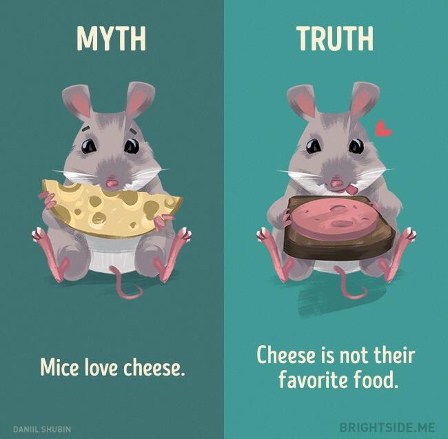 myth vs truth 9 (1)