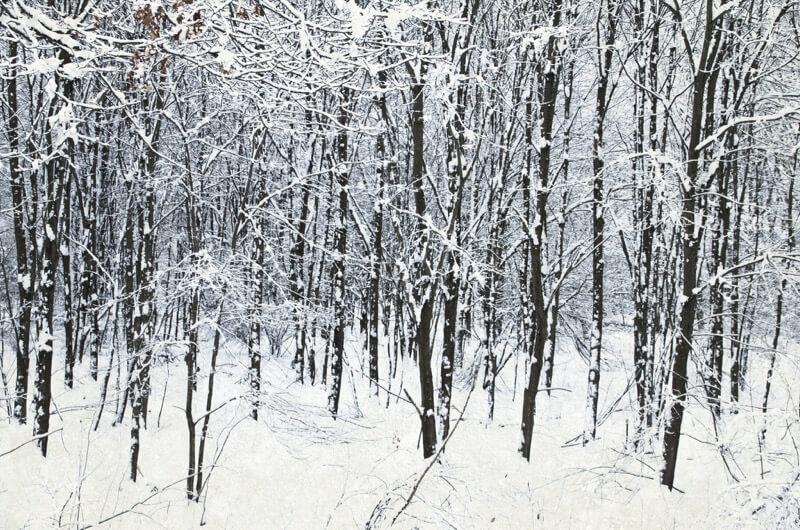 winter photos 30 (1)