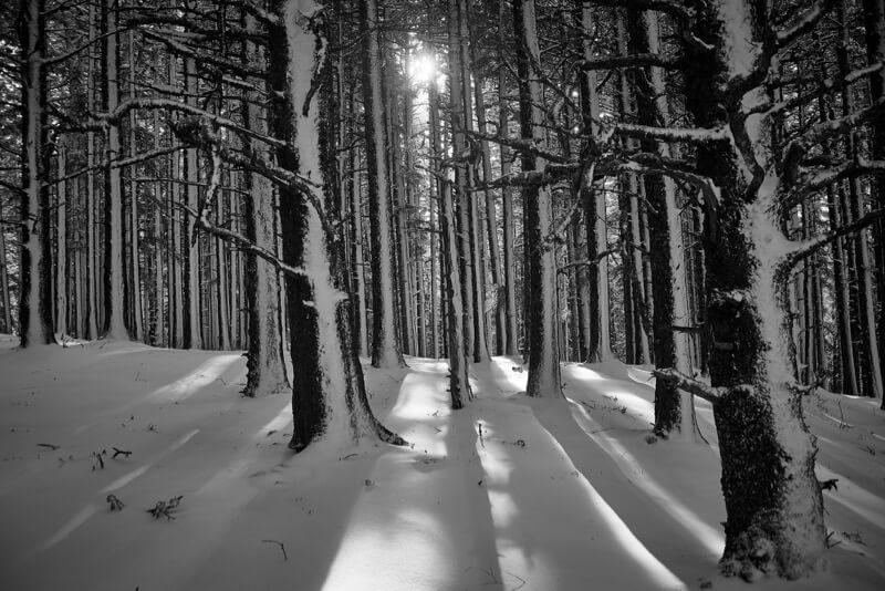 winter photos 35 (1)