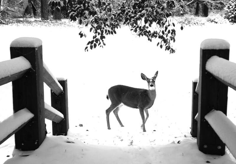 winter photos 38 (1)