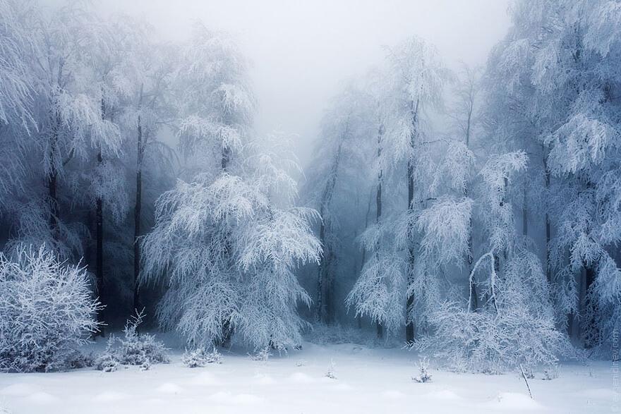 winter pics 6 (1)
