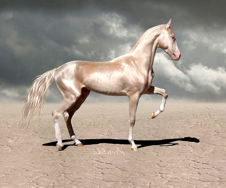Most Beautiful Horse In The World (1)