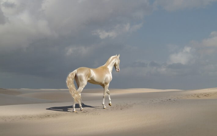 Most Beautiful Horse In The World 2 (1)