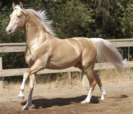 Most Beautiful Horse In The World 6 (1)