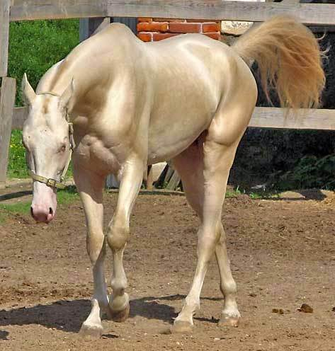Most Beautiful Horse In The World 7 (1)