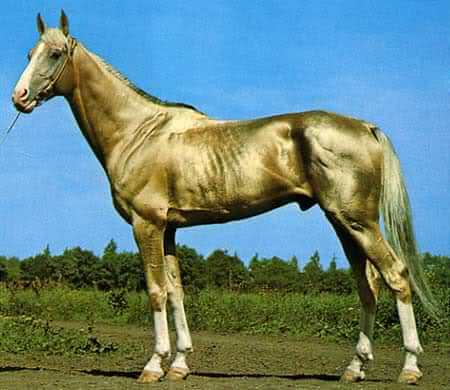 Most Beautiful Horse In The World 8 (1)
