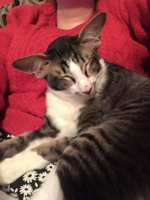 adam driver cat 2 (1)