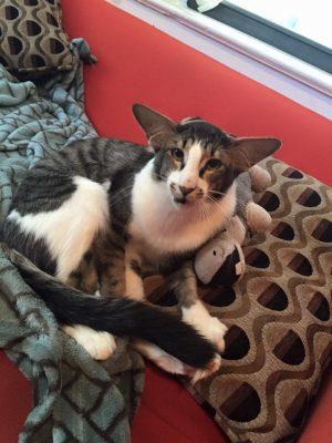 adam driver cat 3 (1)