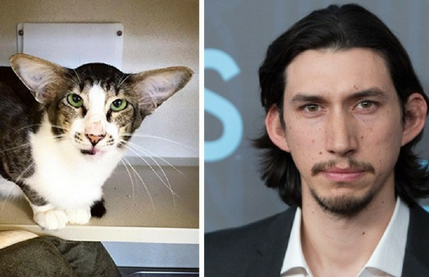 adam driver cat feat