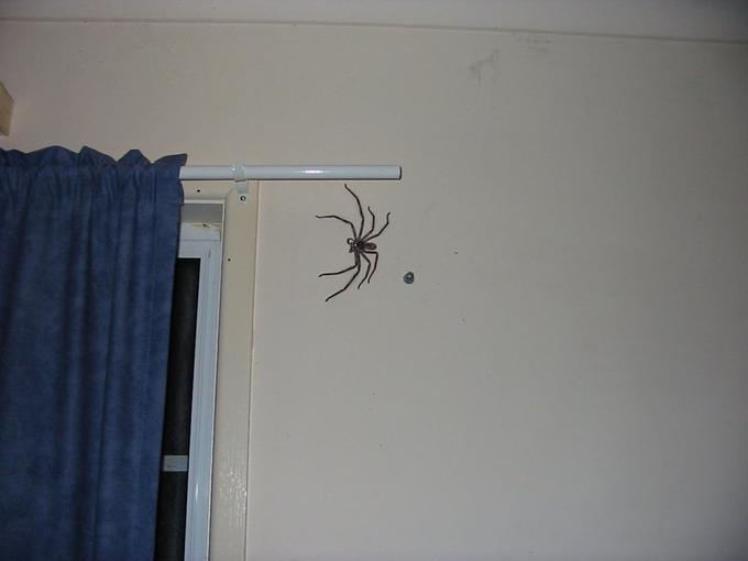 clock spider 2