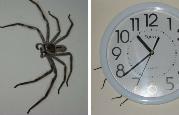 The Clock Spider Is The Most Terrifying Urban Legend I ...