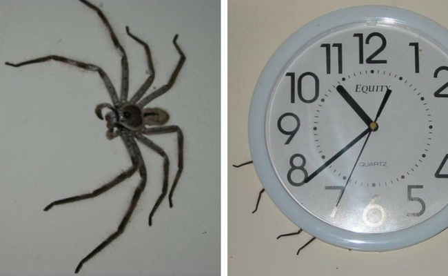 The Clock Spider Is The Most Terrifying Urban Legend I