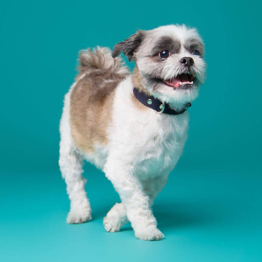 derpy dog portraits by kevin sarasom 16 (1)