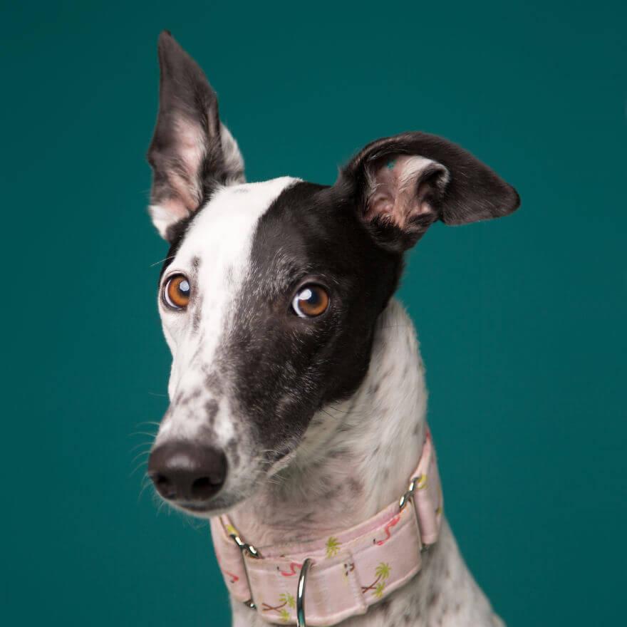 cute dog portraits by kevin sarasom 18 (1)