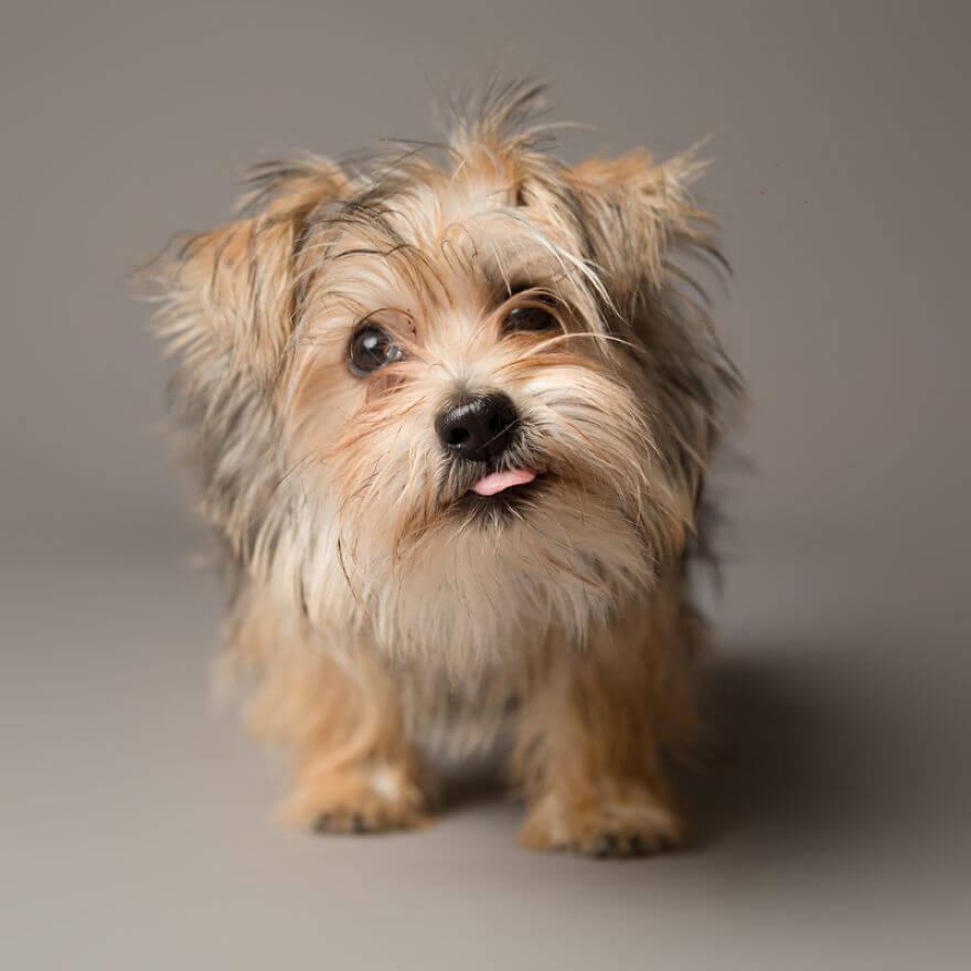 derpy dog portraits by kevin sarasom 2 (1)