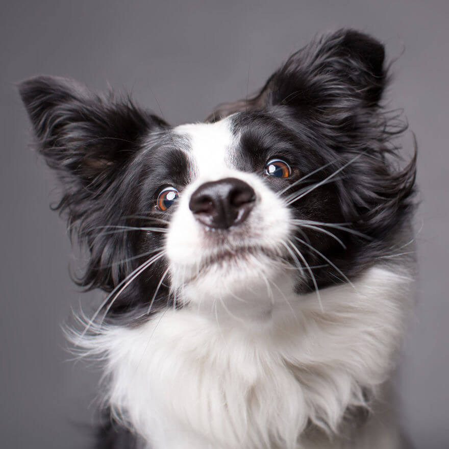 cute dog portraits by kevin sarasom 22 (1)