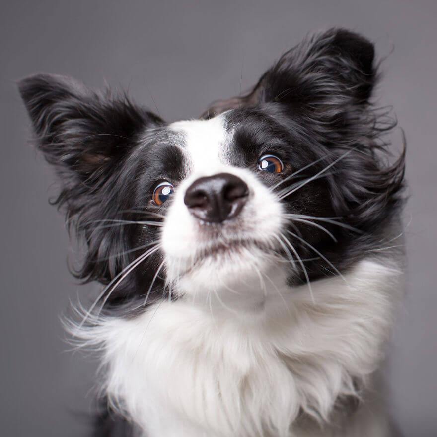 cute dog portraits by kevin sarasom 22 (1)
