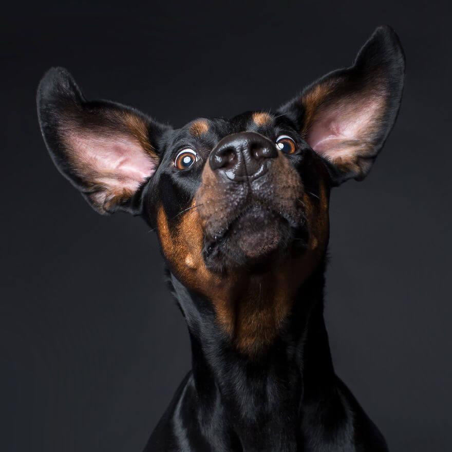 cute dog portraits by kevin sarasom 23 (1)
