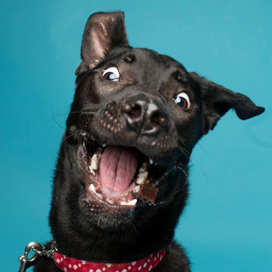 cute dog portraits by kevin sarasom 24 (1)