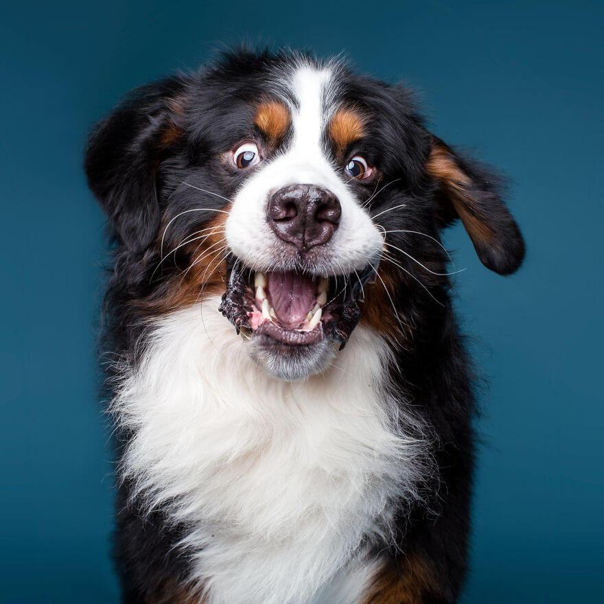 cute dog portraits by kevin sarasom 25 (1)