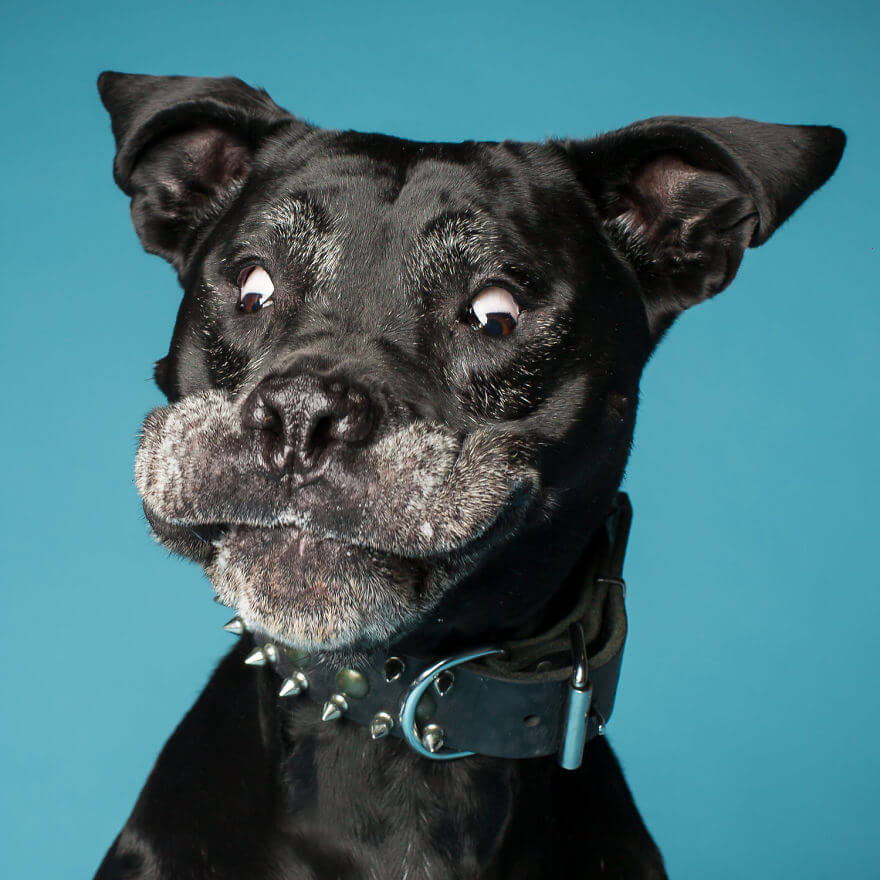 derpy dog portraits by kevin sarasom 28 (1)