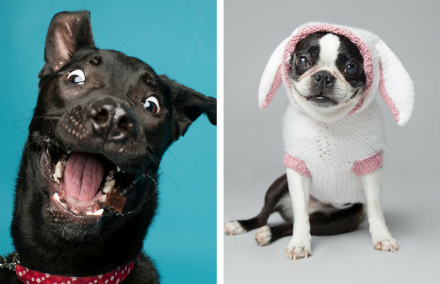 derpy dog portraits feat