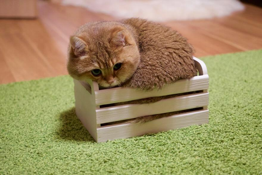 hosico cat (1)