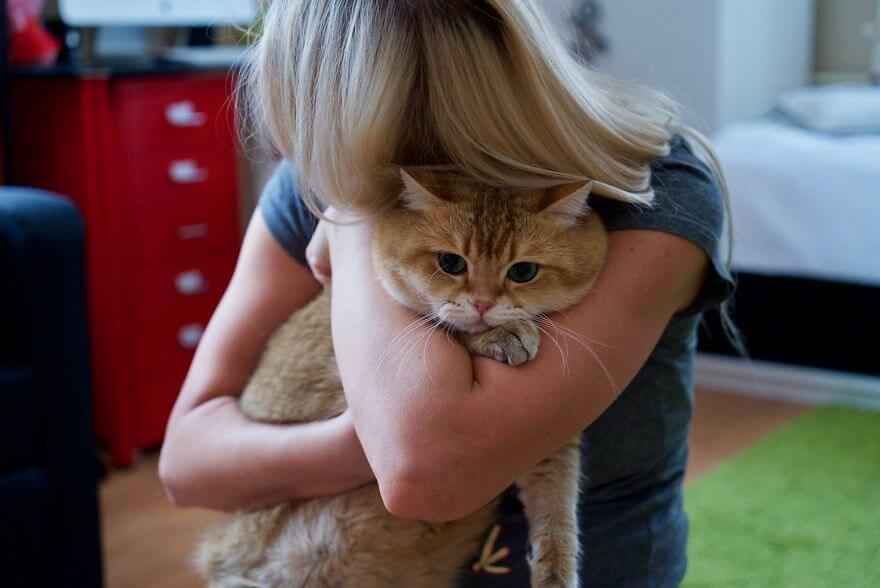 hosico cat 2 (1)