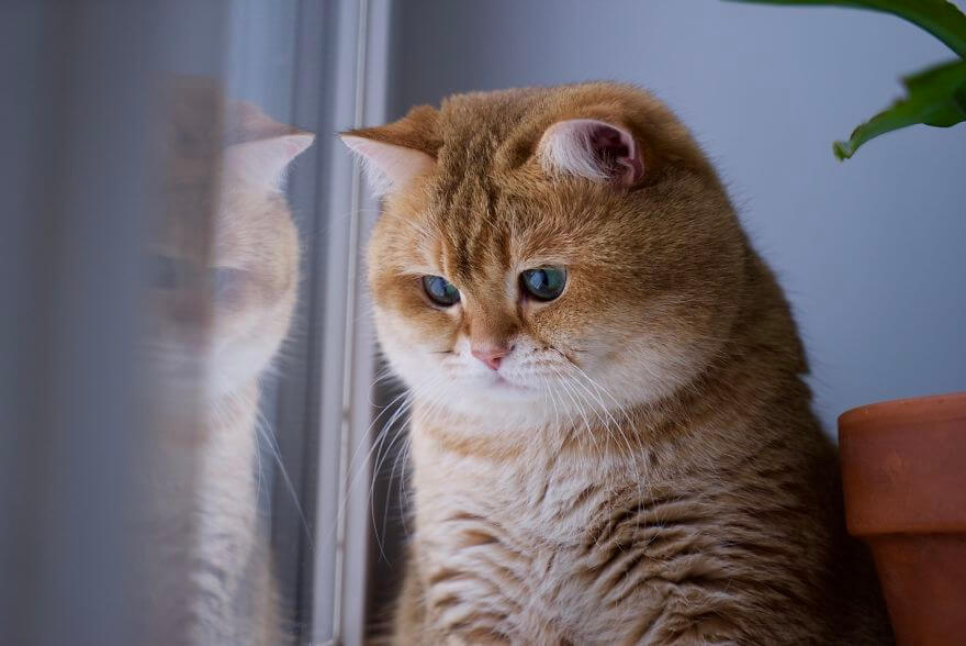 41 Pictures Of The Hosico Cat Proving Once And For All