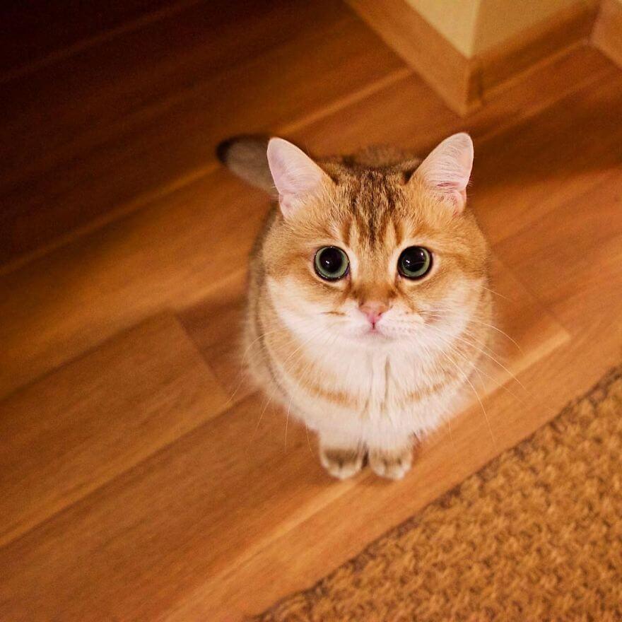 adorable cat 24 (1)