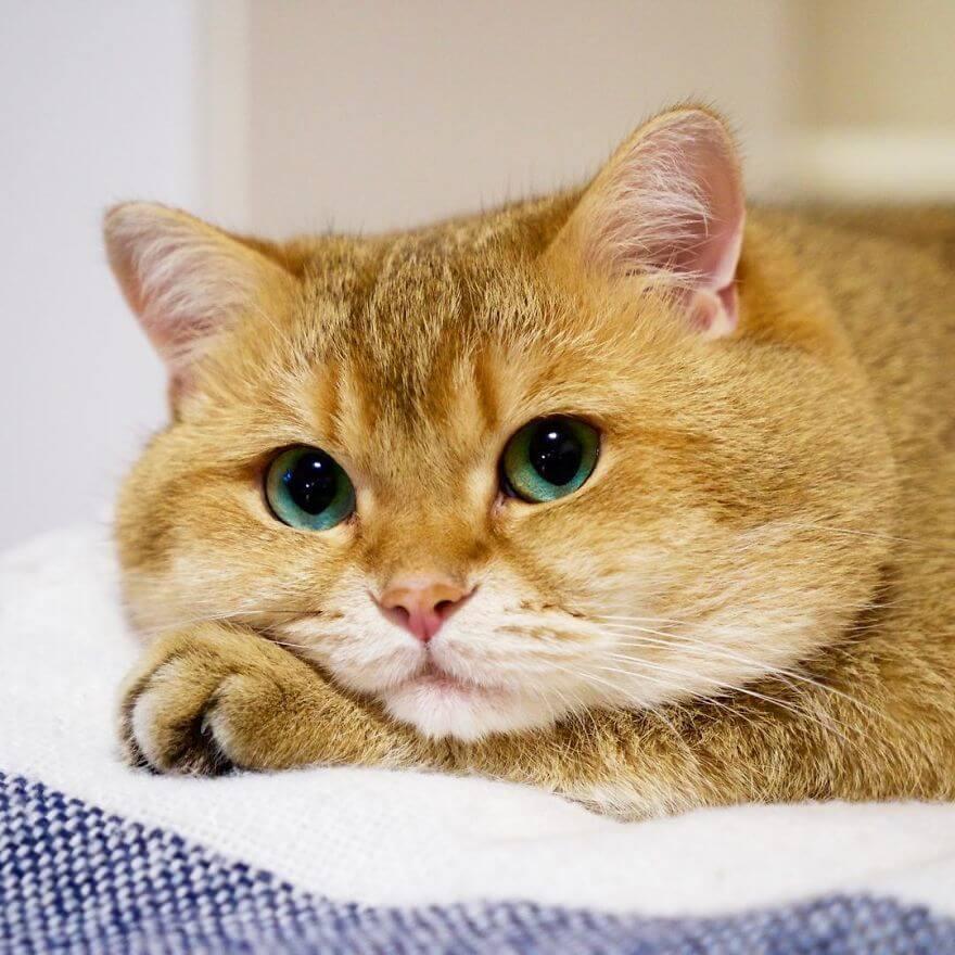 adorable cat 25 (1)