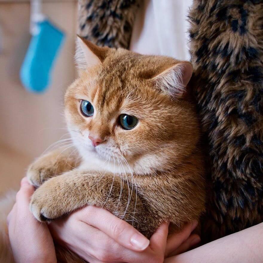 adorable cat 26 (1)