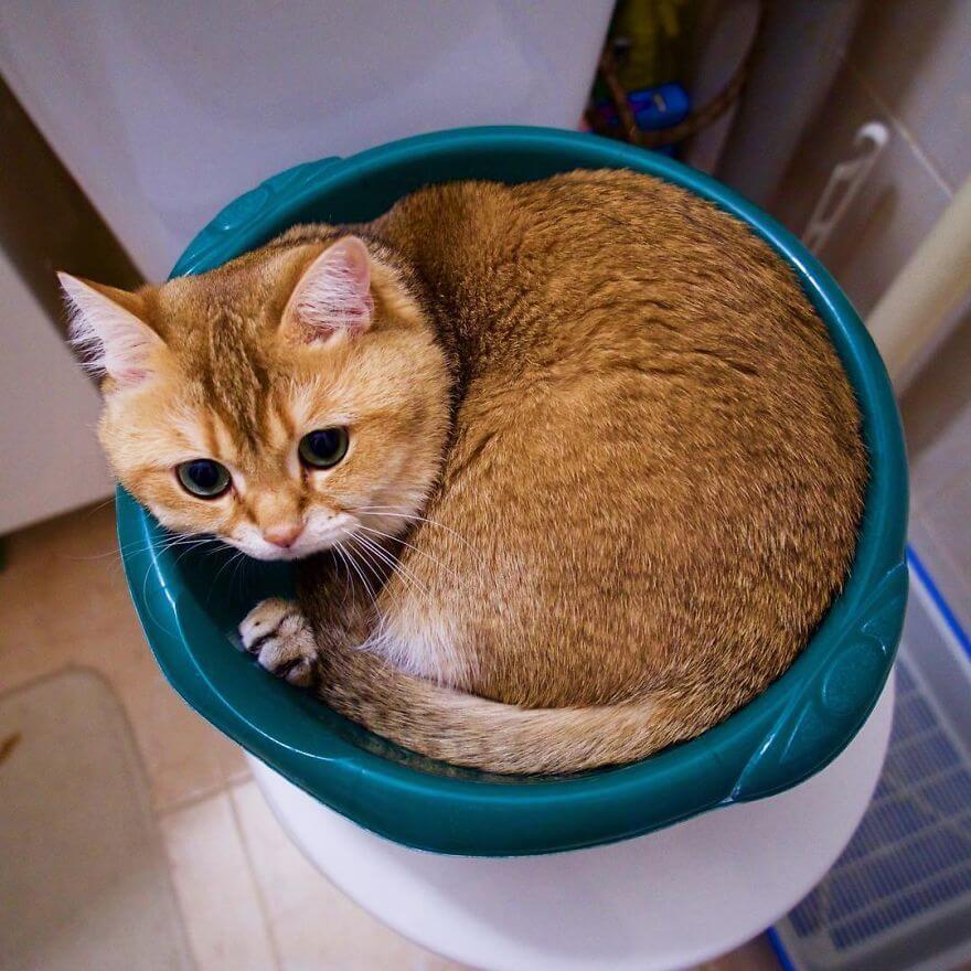 adorable cat 29 (1)