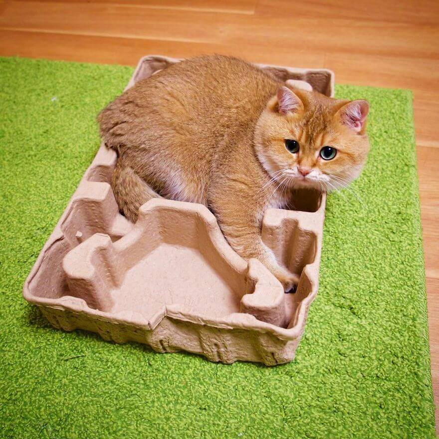 adorable cat 31 (1)