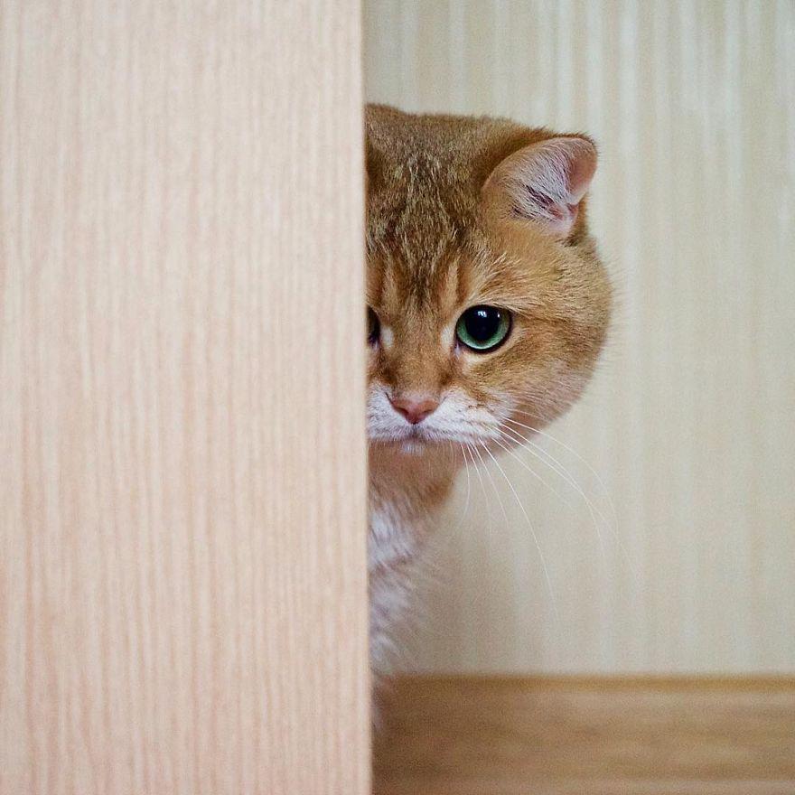 adorable cat 32 (1)