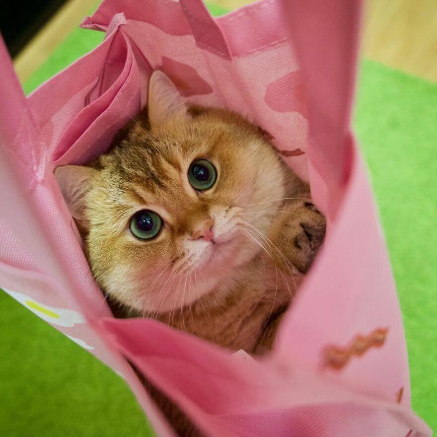 adorable cat 33 (1)
