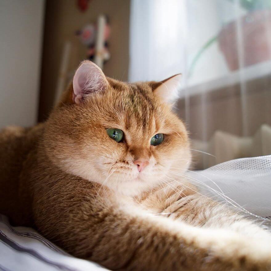 cute cat 36 (1)