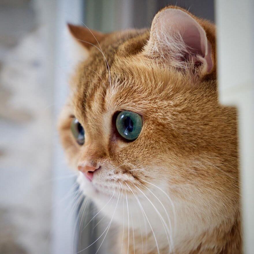 cute cat 37 (1)