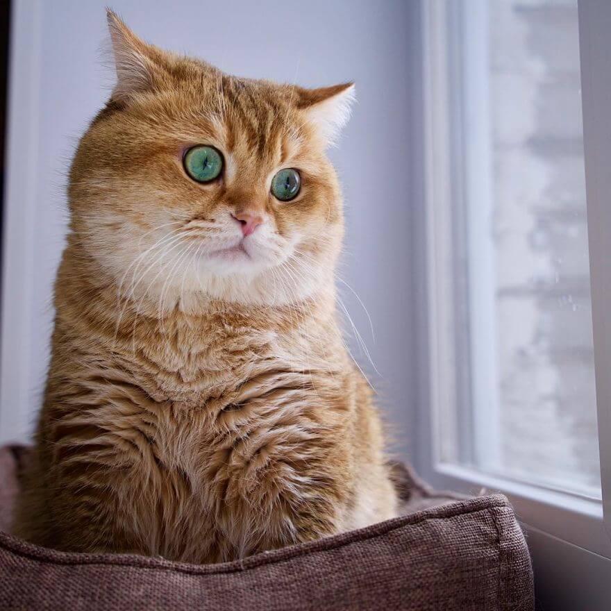cute cat 38 (1)