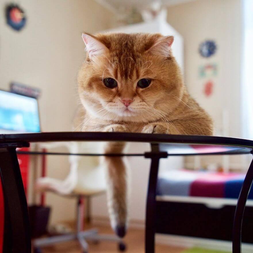 cute cat 39 (1)